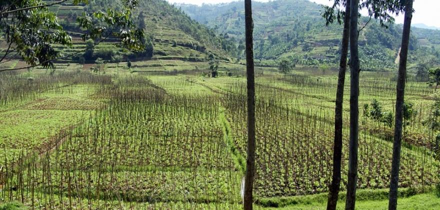 Rwanda paysage